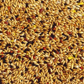 TROPIFIT Canary - pełnowartościowy pokarm dla kanarka 700 g
