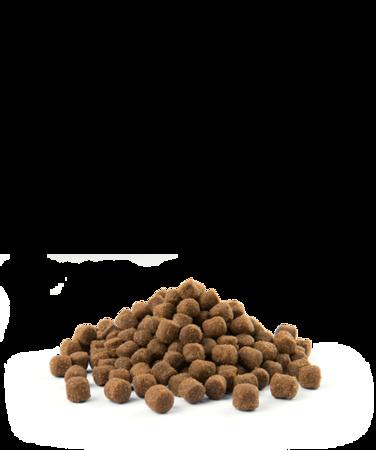 VERSELE-LAGA Opti Life Adult Digestion Mini 2,5 kg - karma dla dorosłych psów ras małych i miniaturowych z wrażliwym układem pokarmowym ( jagnięcina )